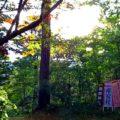 御岳山!午後2時から3時の間に山頂付近の小道に行き木漏れ日を見るのが最高!